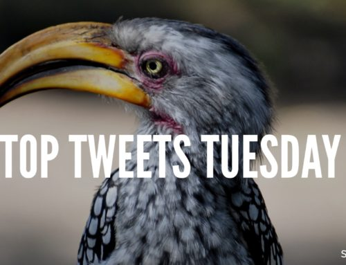Top Tweets Tuesday – Issue #12
